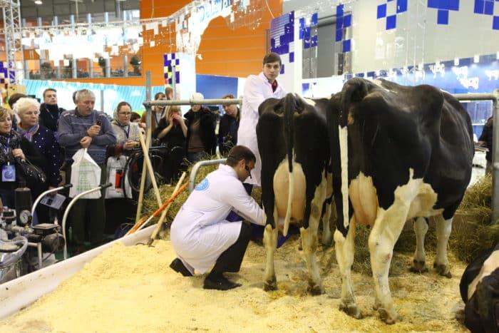 Домашние животные, сельское хозяйство и животноводство