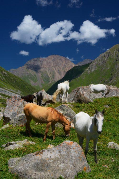 животные в Тянь Шань