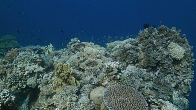 Острова и рифы