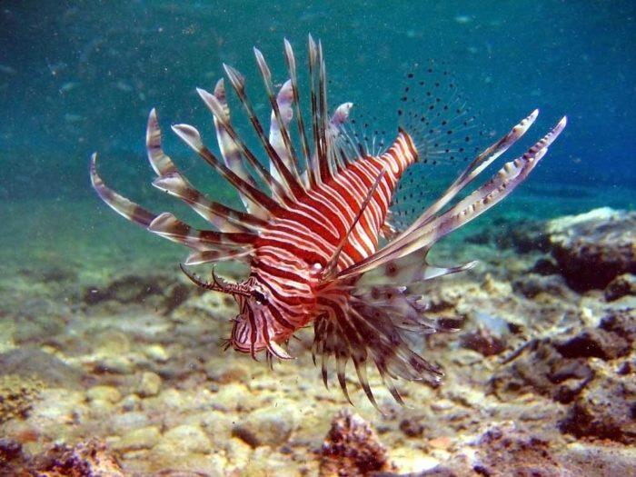 Растительность и обитатели моря