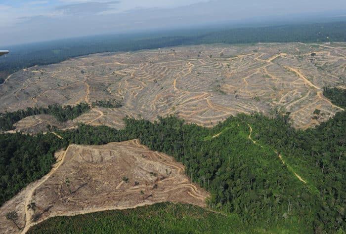 Вырубка леса в Сибири