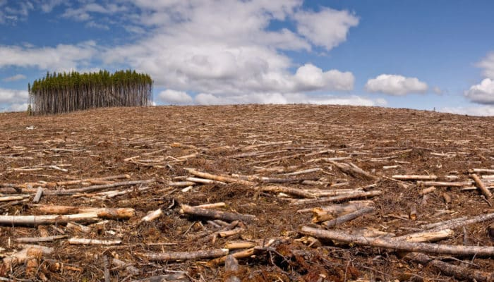 Вырубка леса в Сибири китайцами