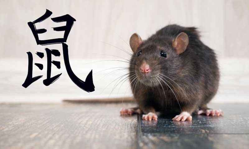 год крысы в Китае 2020
