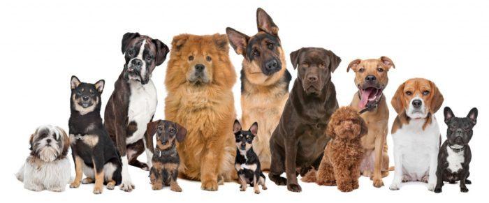 Китайские породы собак
