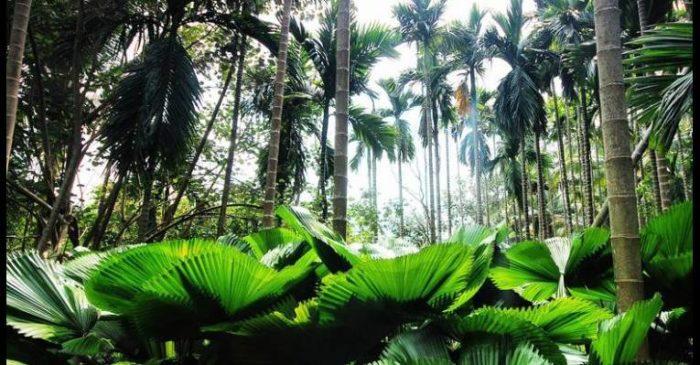 Ботанический сад Синлун