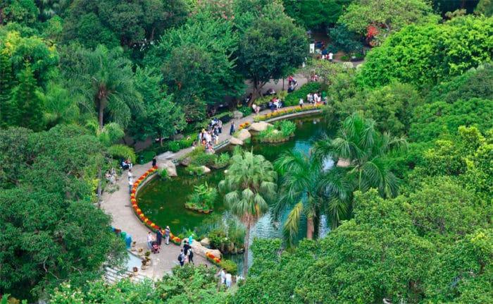 Тропический рай в центре урбанистического колосса.