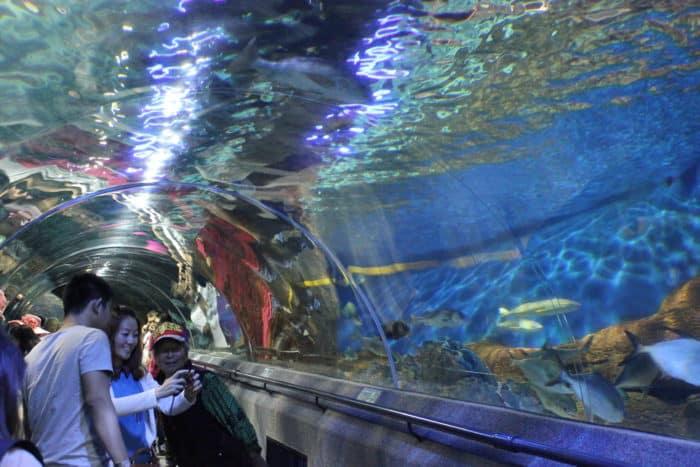 Океанариумрасполагается в парке «Синхай»