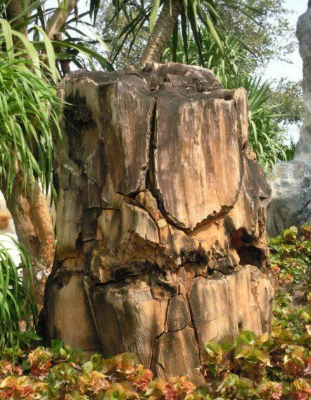 Парк окаменевших деревьев (Liyshan Park)