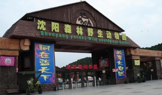 Печально известный зоопарк Shenyang Zoo