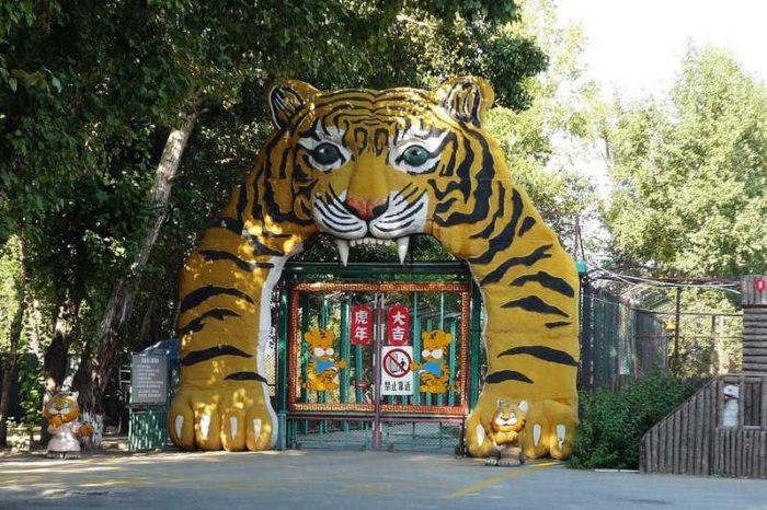 Сафари – парк тигров