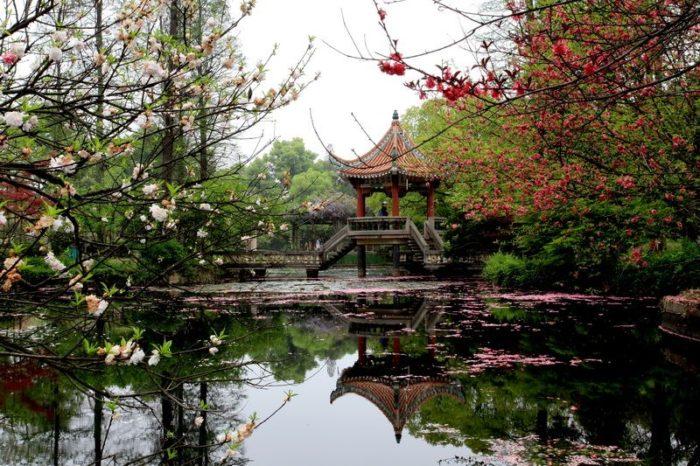 Уханьский ботанический сад