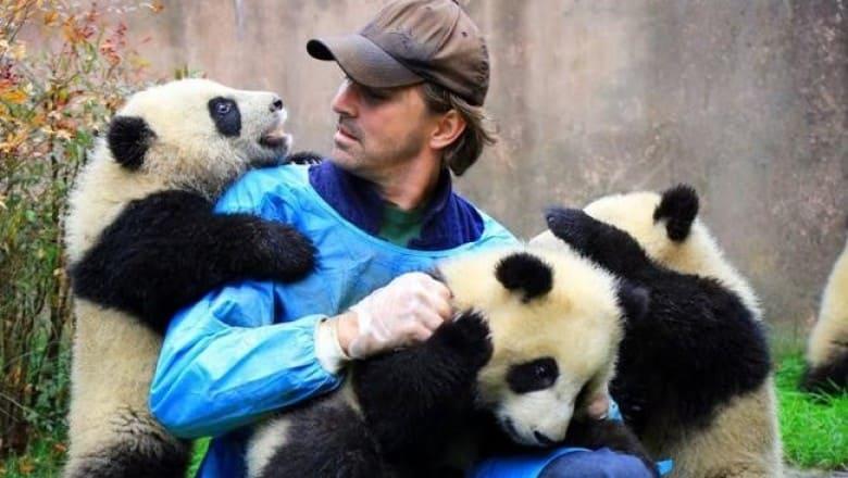 Обниматель панд в Китае